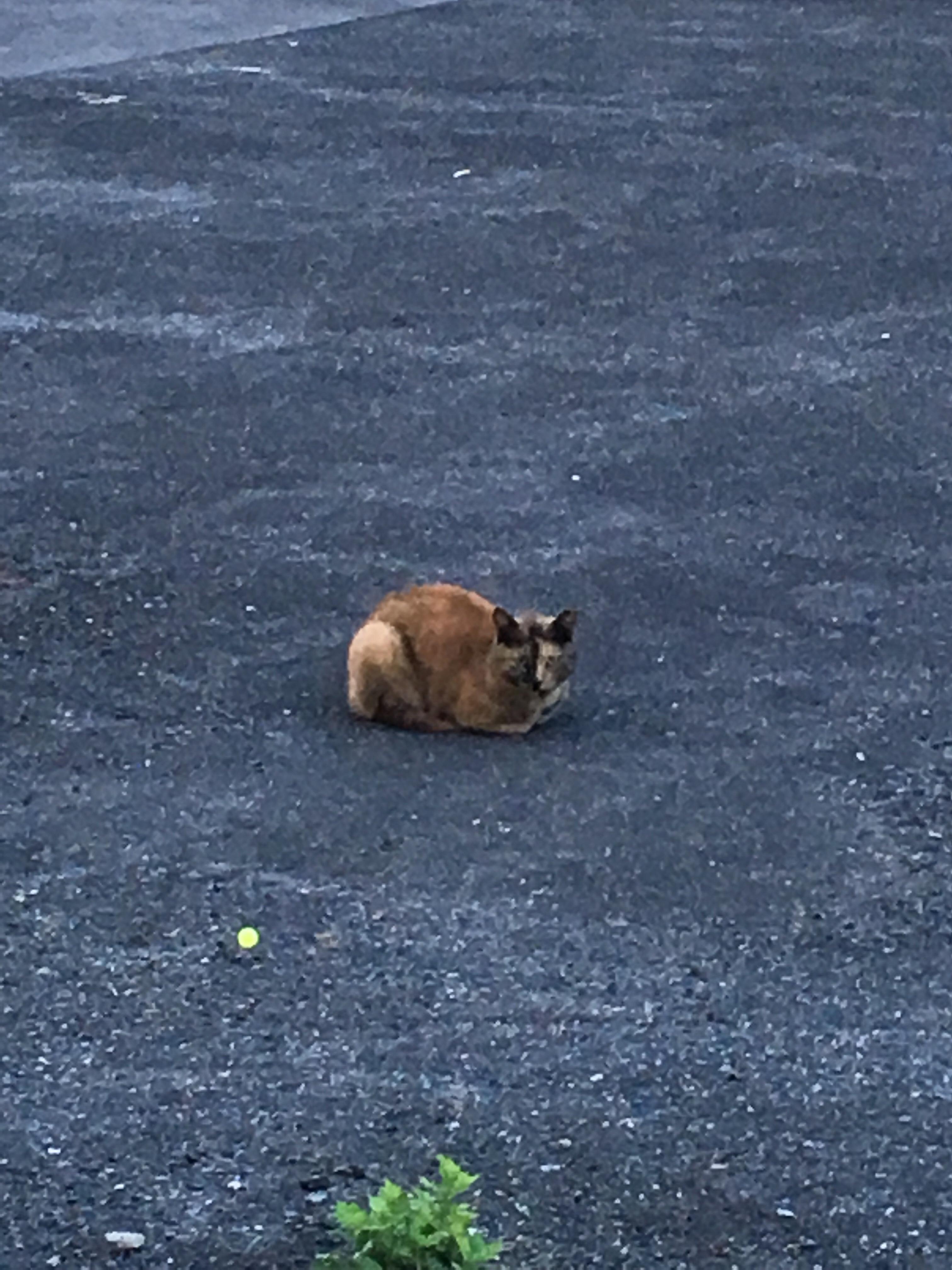 会社帰りに見かけたネコ