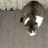 帰宅を待つ近所の「のらネコを家ネコ」へアップデート中