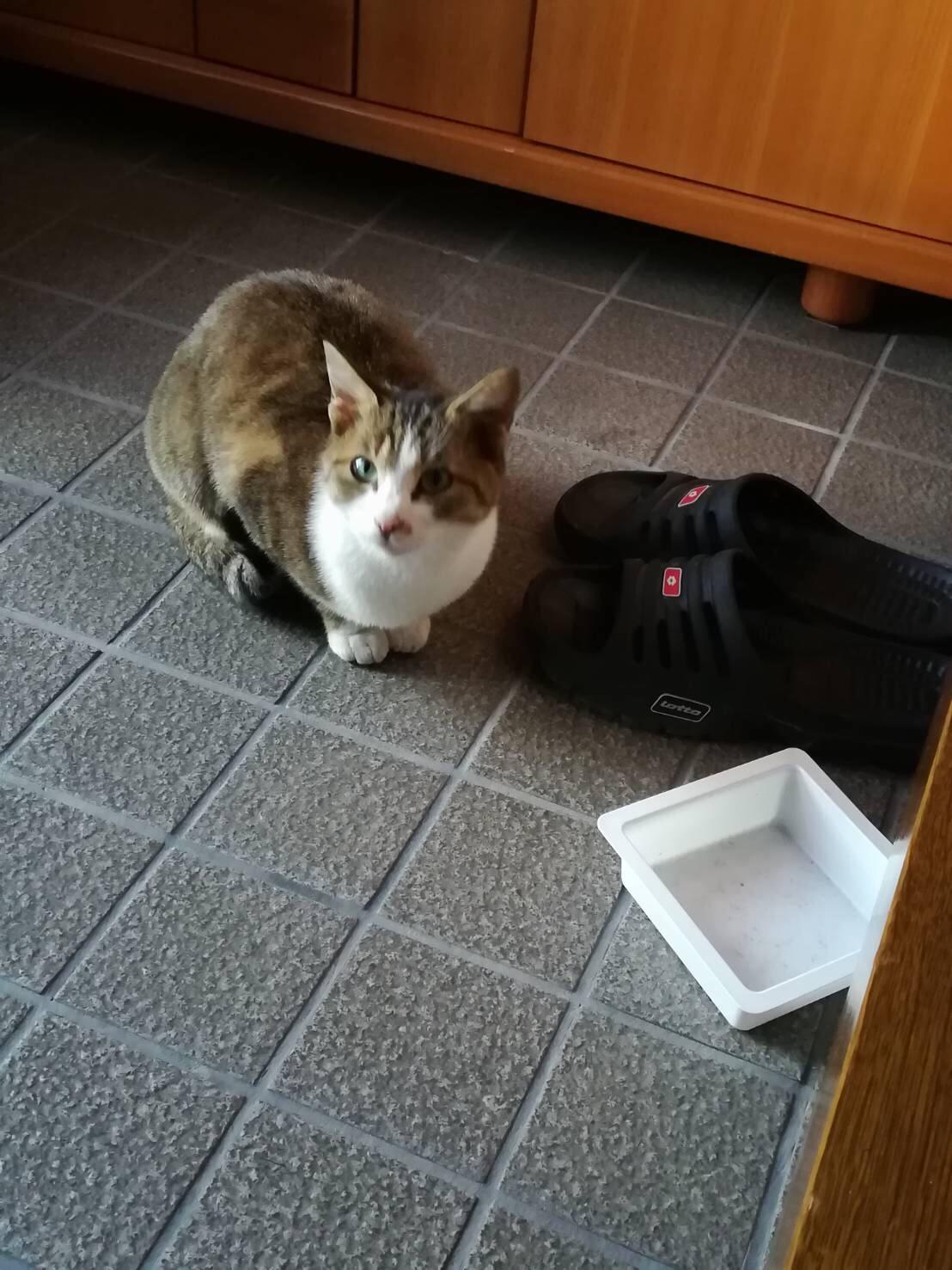 ついに玄関まではやってきた。「野良ネコを家ネコ」へアップデート中。