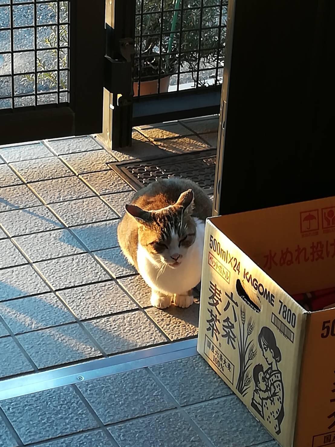 街で見かけたネコちゃんたち