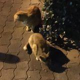 帰宅途中で3匹のノラネコちゃんに遭遇