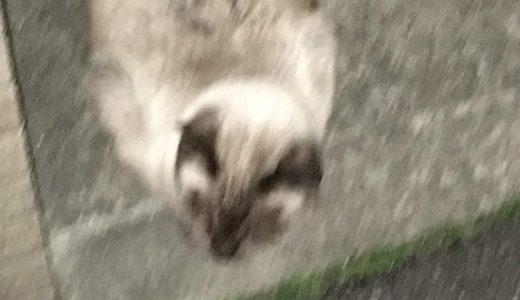 こののらネコちゃんはは触らせてくれました