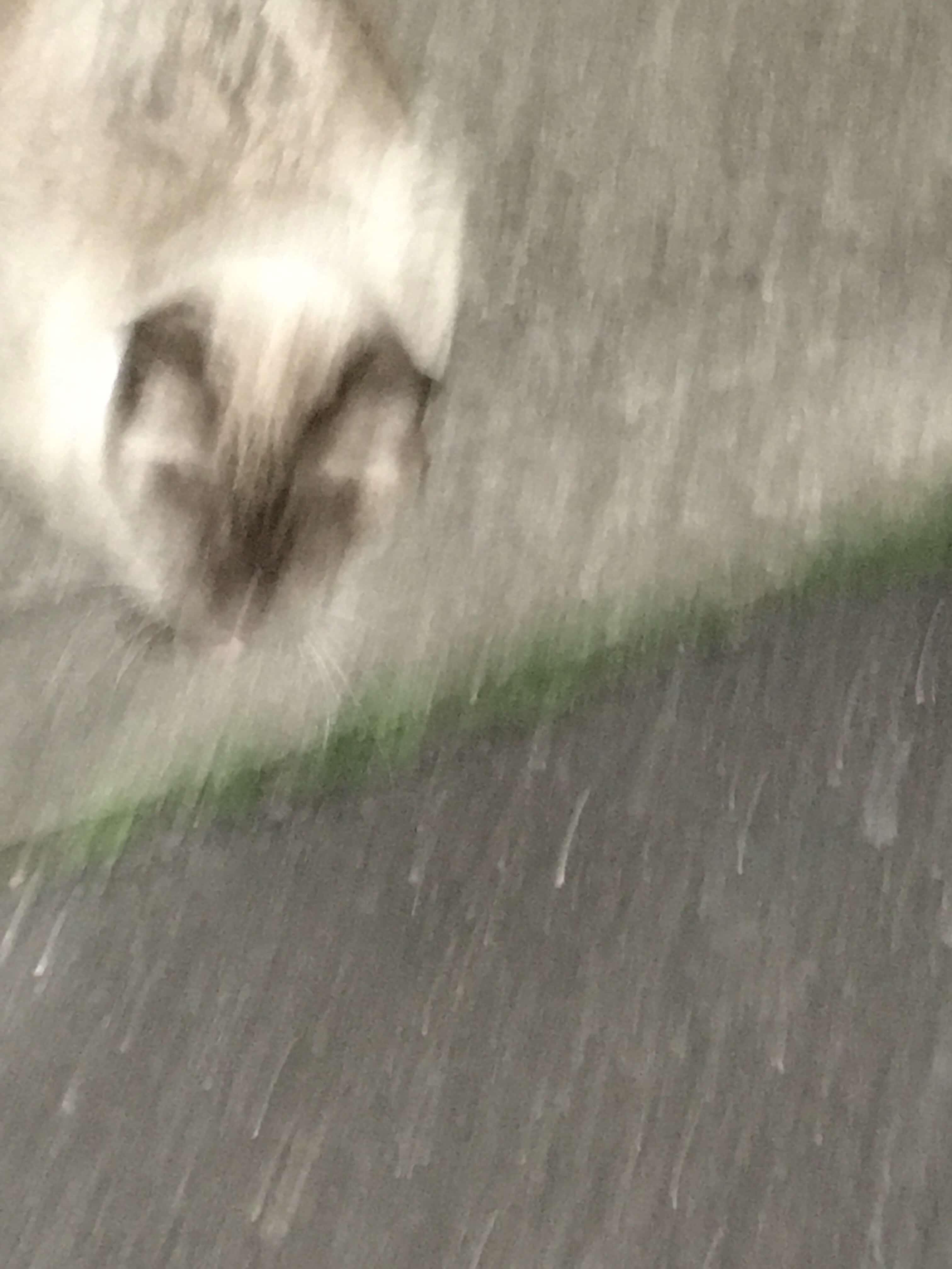 帰り道ののらネコ