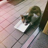のらネコのミーちゃん、心の叫びPart2「ねぇ、エサは、エサ。」