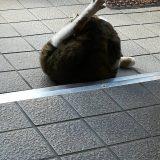 のらネコみーちゃん、ちょっとしつれいしますにゃ~