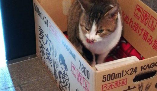 のらネコみーちゃん、今日は朝からのご訪問です。寒さでお腹がすくのか旺盛な食欲。お顔アップの写真撮れました。