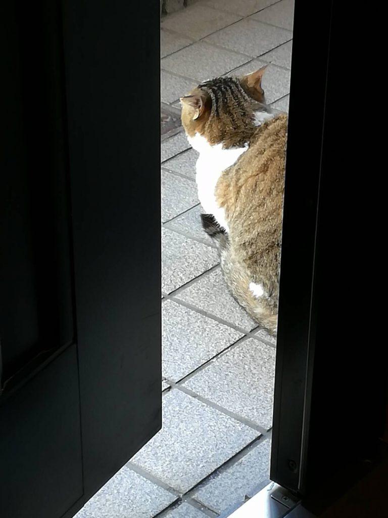 のらネコのみーちゃん