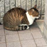 のらネコのミーちゃん、珍しくお外で横からショット