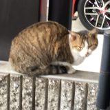 ちょっとお急ぎのらネコのミーちゃん