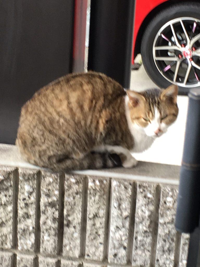 のらネコのミーちゃん、塀の上でにらみ利かす。