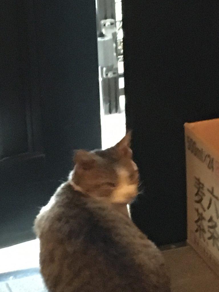 のらネコのミーちゃん、階段を駆け上がってびっくり