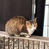 のらネコのミーちゃん、階段駆け上がる!!