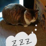今日ののらネコのミーちゃんはちょっとお眠のミーちゃんでした。