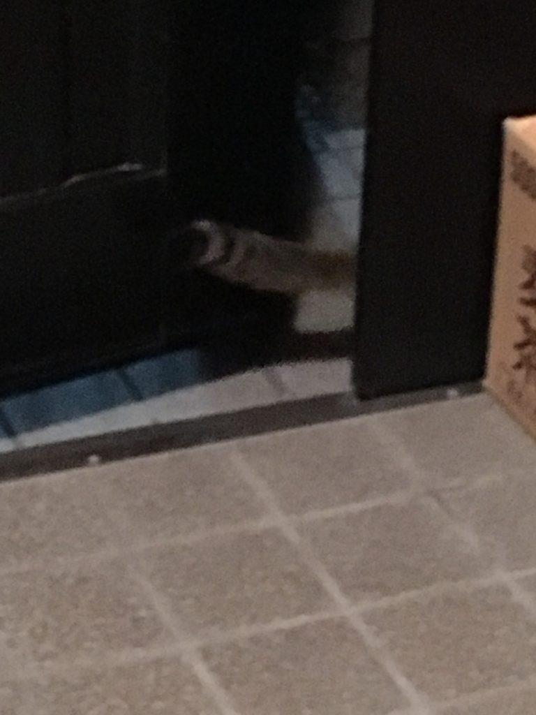 のらネコのミーちゃん、しっぽだけ。 srcset=