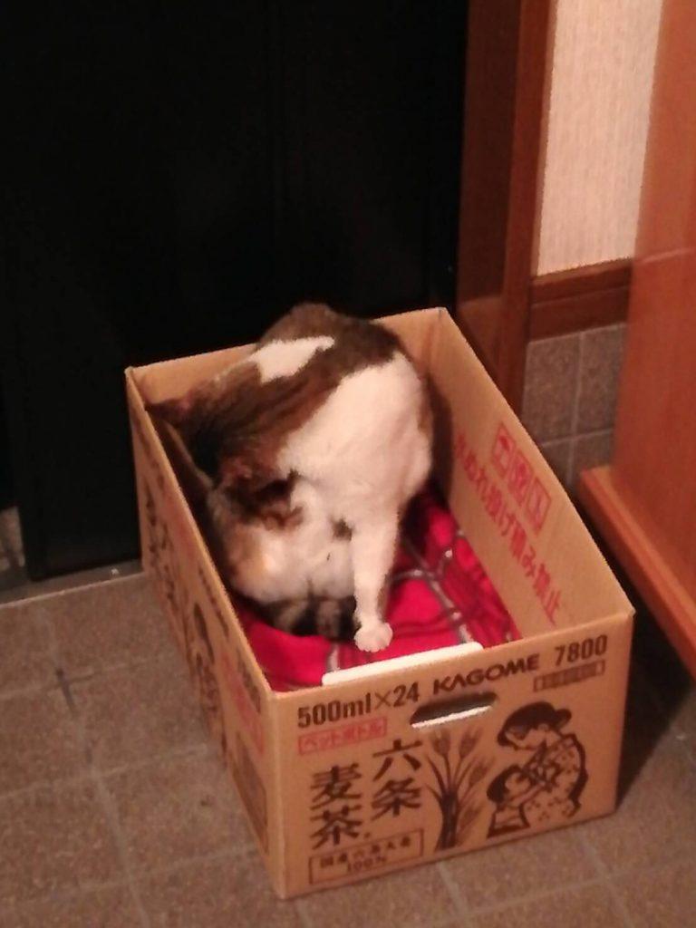のらネコのミーちゃん、こんなところも毛づくろいしちゃうにゃ~。