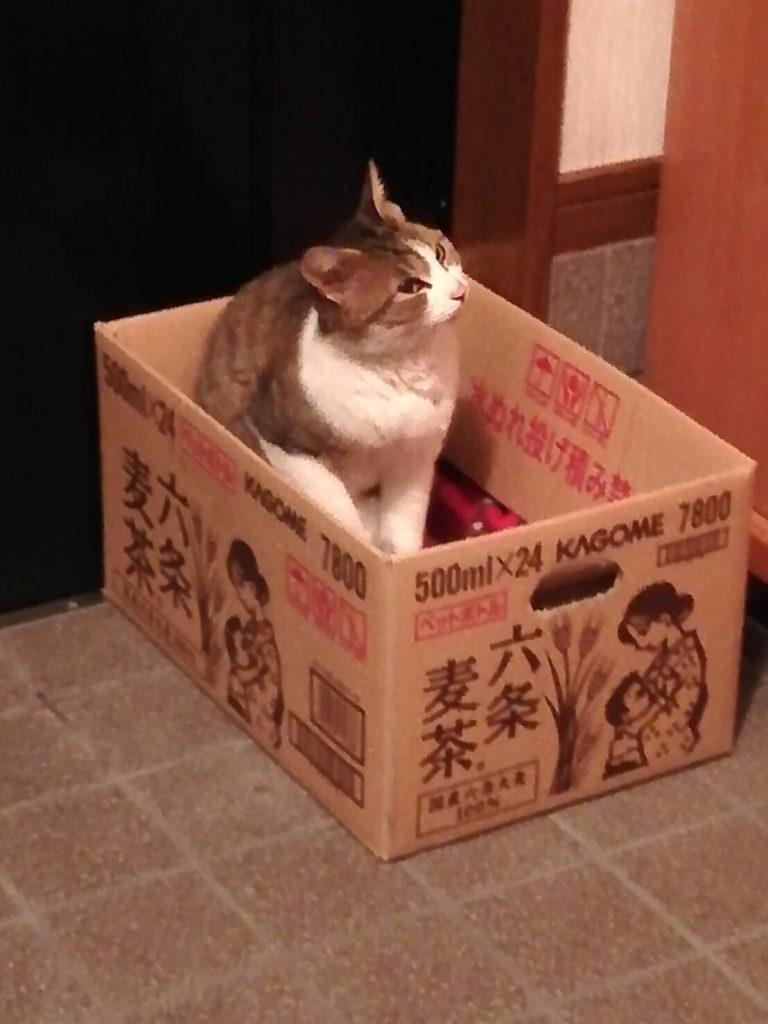 のらネコのミーちゃん、ちょっと階段の上も気になるにゃ~。