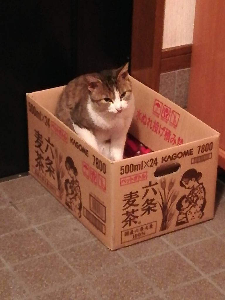 のらネコのミーちゃん、なんか気持ちいいにゃ~。