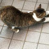 背伸びののらネコのミーちゃん